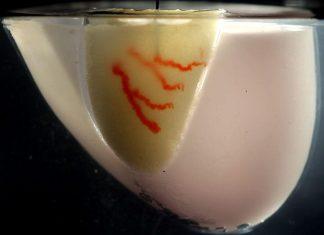 چاپ ارگان های بدن روی بافت زنده