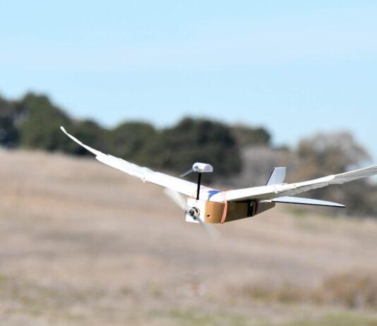ربات پرنده PigeonBot با پرهای واقعی می تواند همانند یک پرنده واقعی پرواز کند