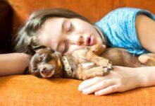 ديدن سگ در خواب تعبيرش چيست