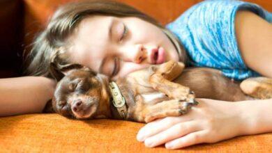 Photo of ديدن سگ در خواب تعبيرش چيست و گاز گرفتن سگ در خواب نشانه چیست